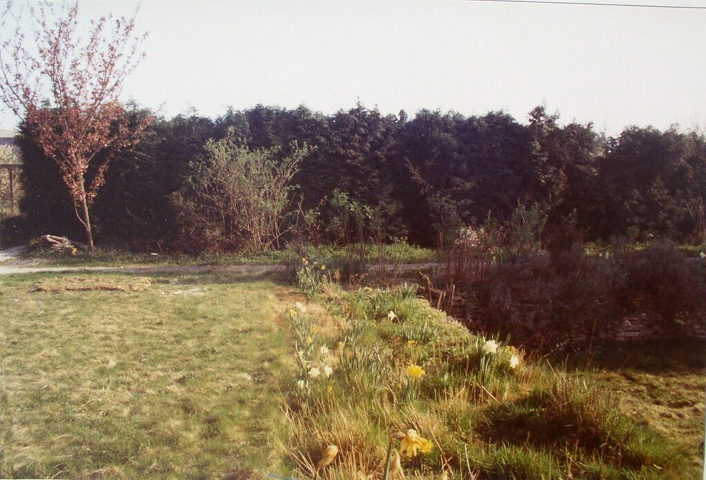 Top Lawn 1984